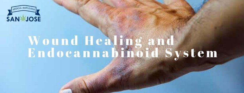 Wound Healing and Endocannabinoid System