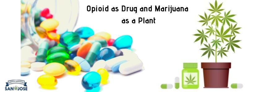 Opioid as drug and marijuana as a plant