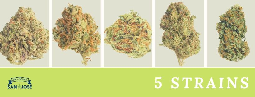 5 amazing strains