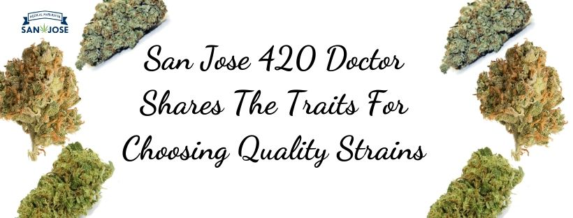 San Jose 420 Doctor Shares The Traits For Choosing Quality Strains
