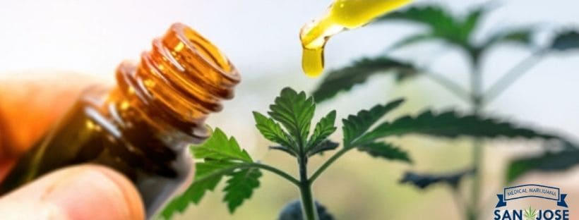 Patients With Medical Cannabis Recommendation Must Know These CBD Myths