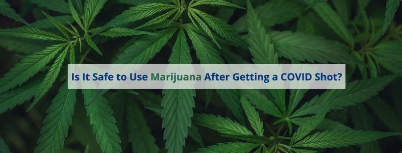 Medical marijuana San Jose